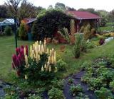Zahrada s chatou na Kokořínsku